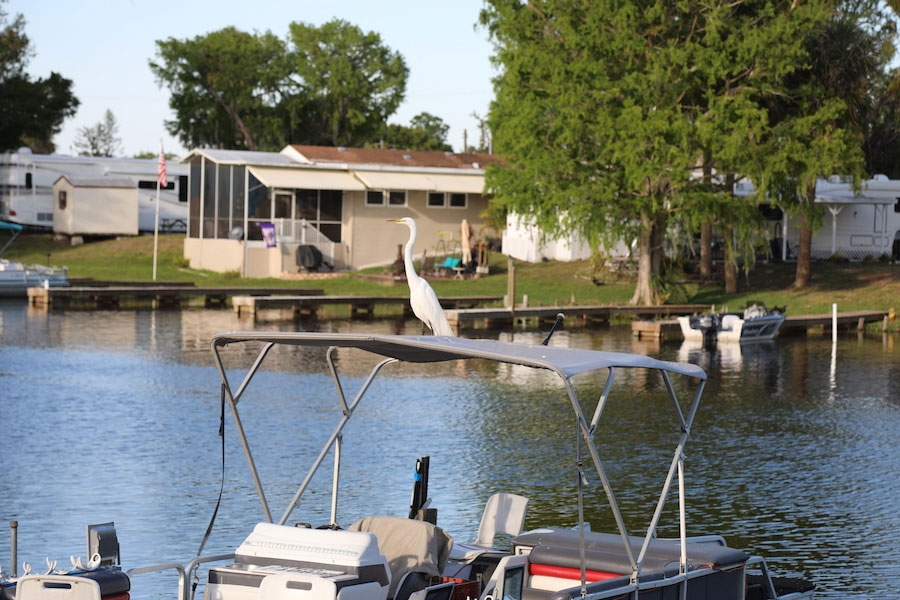 Lake Okeechobee 55 Mh And Rv Park Eagle Harbor Rv Resort